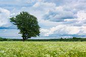 Vibrant Summer Plain Nature