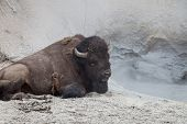 Buffalo Spa Day