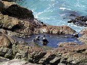 Fur Seal Pups Bathing, Ohau Point, New Zealand