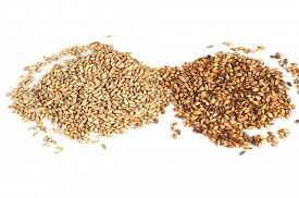 stock photo of malt  - Close photo up of malt grains - JPG