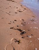 picture of shoreline  - Shoe prints walking on sandy beach shoreline - JPG