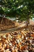 foto of unique landscape  - Amazing landscape of Vietnamese coconut area heap of coir on country road in evening make impression unique view on summer tree on path Ben Tre is place for travel at Mekong Delta - JPG