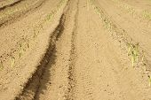 stock photo of track field  - The tractor tire tracks and furrows in a field with asparagus - JPG