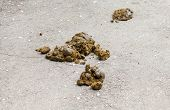 pic of smelly  - Fresh smelly horse manure on the asphalt surface - JPG