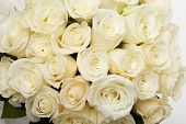 picture of white roses  - Cream roses - JPG