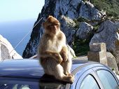 Monkey On A Car