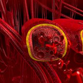 stock photo of leukocyte  - human blood arteries and veins cut section with red blood cells - JPG