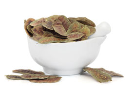 stock photo of laxatives  - Senna pods in a porcelain mortar with pestle over white background - JPG