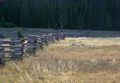 stock photo of split rail fence  - Split rail zigzag log fence ending in far away forest - JPG