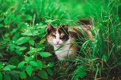 Closeup Portrait Of Face Of Beautiful Young Angry Looking Cat Hiding Among Fresh Green Grass. Cat St poster