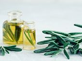 Rosemary Oil. Rosemary Essential Oil Oil In Small Glass Bottle And Branches Of Plant Fresh Rosemary  poster