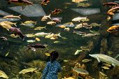 Постер, плакат: Child Looks At The Sea Fish In Aquarium Little Girl Admires The Aquatic Life In The Zoo Many Color