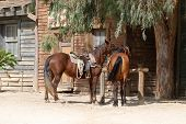 image of forty-niner  - Scenery in a traditional American western town - JPG