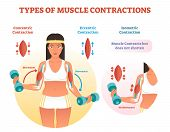 Muscle Contractions Scheme With Arm Cross Section And Fitness Weight Lifting Exercise Movement. Conc poster