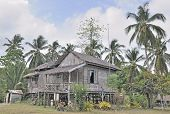Traditional wooden house surrounded by palm trees