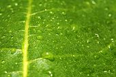 Waterdrops On A Leaf