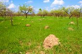 Anthill Among Spring Herbs