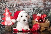 New Years Puppy breed Jack Russell Terrier portrait dog, Christmas dog poster