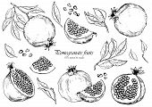 Vector Set Of Pomegranate Fruits. Black And White Sketchy Illustration. Isolated Elements For Design poster