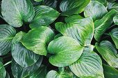 Tropical Leaf With Water Drops. Tropical Natural Background Of Leaves With Dew Drops. poster