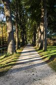 Way In The Park In Autumn. Fall Forest Landscape. poster