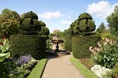 fountain, path, & yew topiary