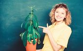 Botany Is About Plants Flowers And Herbs. Take Good Care Plants. Florist Concept. Girl Hold Plant In poster