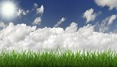 Grass And Withe Sky