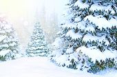 Beautiful Winter Forest. Landscape With Christmas Trees Covered In Snow In Winter Forest. Snowdrifts poster