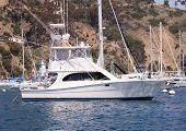 Moored Sportfisher Yacht