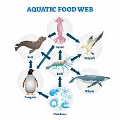 Aquatic Food Web Vector Illustration. Labeled Educational Water Life Scheme. Wildlife Cycle As Natur poster