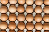 Many Brown Chicken Eggs In The Nests Of The Carton. Eggs In A Carton Paper Package. poster