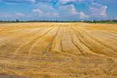 Agricultural Landscape With Harvested Wheat Field And Combine Harvester Traces At Summer Season In U poster