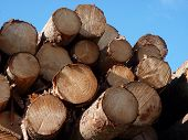Logs in sunlight with blue sky