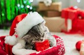 Christmas Presents Concept. Christmas Cat Wearing Santa Claus Hat Holding Gift Box Sleeping On Plaid poster