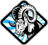Bighorn Ram Sheep Goat