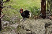 Wild Bird At Zoo