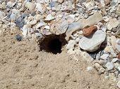 Crab burrow