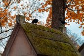 Crow On The Toms Covered With Moss In The Most Famous Cemetery Of Paris Pere Lachaise, France. Tombs poster