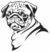 Dog Pug illustration