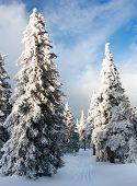 bela vista invernal de madeira neve nas montanhas