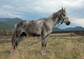 Dirty White Horse
