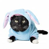 foto of sad christmas  - black cat in a bunny suit isolated on white background - JPG