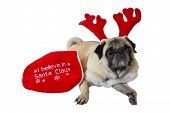 Beige Pug Wearing Christmas Attire 10