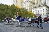 Horse And Buggy Central Park