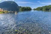 picture of spawn  - Spawning salmon congregating at creek entrance at Herring Cove in Silver Bay near Sitka Alaska with Sugarloaf Mountain in background - JPG