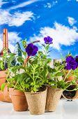 Garden stuff with vivid colors, rural concept