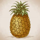 Engraving Pineapple In Retro Style