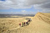 Hikers In Negev Desert.