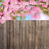 Postcard With Fresh Spring Flowering Tree And Empty  Place For Your Text